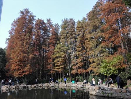 Colorful cedar