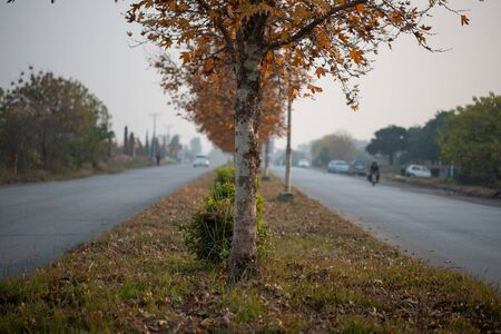 Trees on the green belt of the road in islamabad, Fall season in Islamabad.