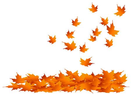 Autumn maple leaves falling into a pile