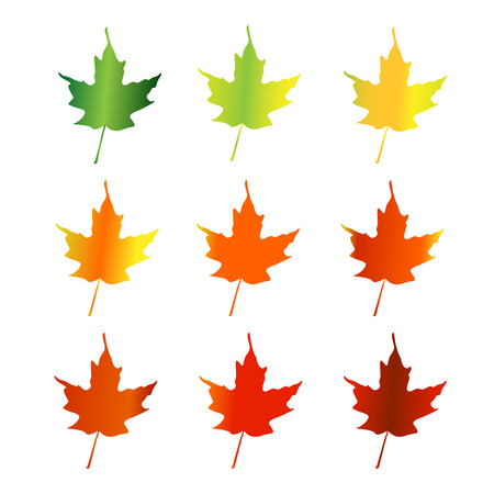 Silhouettes of maple leaves changing color in spring, summer and fall