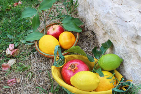 Various fresh fruits in baskets on the ground: lemon, pomegranate, orange, tangerine, apple, lime. Concept gifts of nature