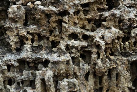 hard coral: tropical coral reef