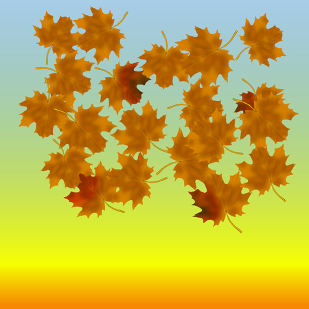 Maple leaves at the end of autumn. In the background of heaven