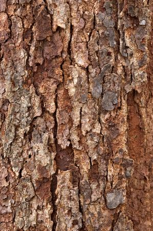 redbud tree: Tree bark of a redbud tree. Stock Photo
