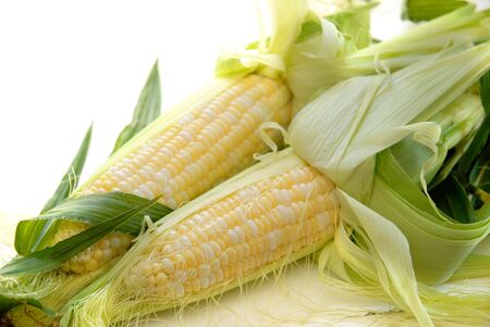 Sweet corn on the cob with husks pulled back to reveal the sweet kernels.