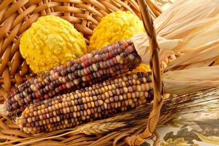 Indian corn and gourds in an autumn basket. photo