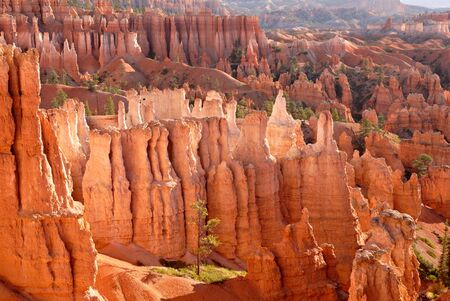 Hoodoos of Bryce Canyon National Park, Utah in the morning light.