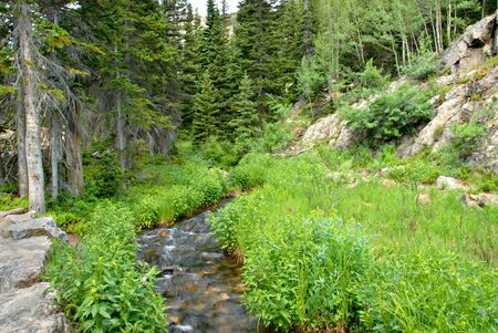A small stream along the trail to Dream Lake in the Rocky Mountain National Park, Colorado. Stock Photo - 2801283
