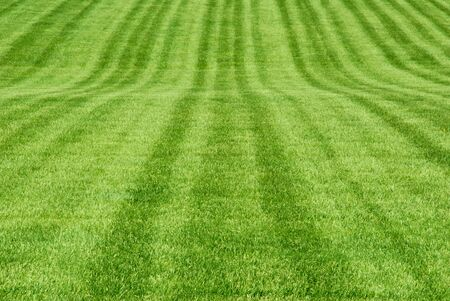A broad expanse of mown grass.