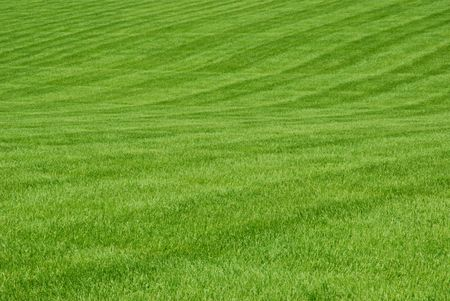 A broad expanse of green grass. Stock Photo