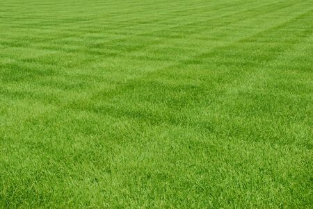 Patterns in freshly mowed grass. Stock Photo