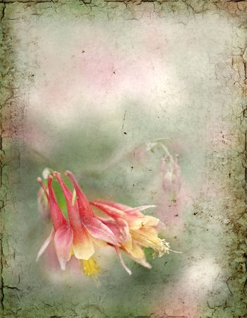 old pc: A grungy background of a columbine flower.