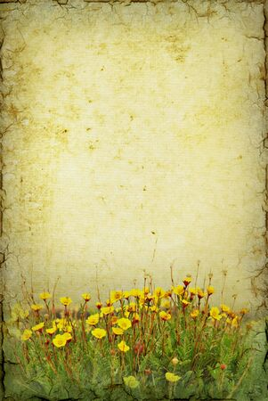 tundra: Illustration art of tundra flowers on a grunge background with copy space. Stock Photo