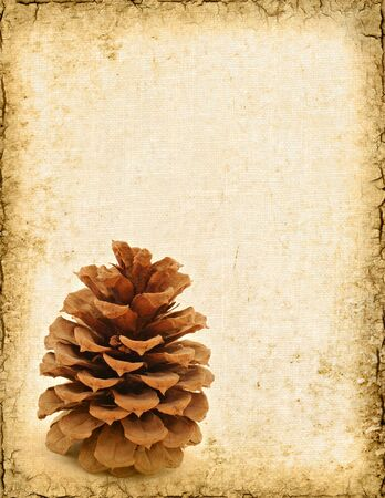 Grunge background of a pine cone with room for text.