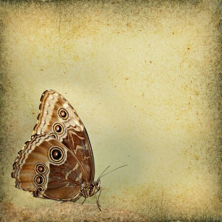 Butterfly grunge background with room for text.