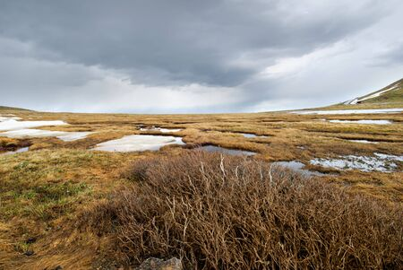 Colorado tundra in early summer with spring just beginning to make an appearance. Stock Photo - 5318015