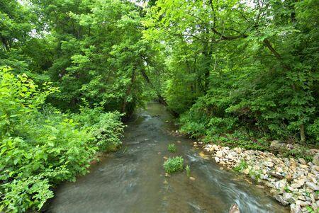 A Missouri stream through a woodland. photo