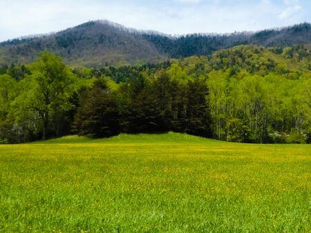 Meadow 版權商用圖片