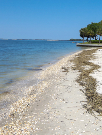 Sandy beach on Atlantic ocean lined with oyster shells and straw