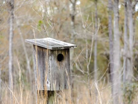 Unpainted staked wooden bird house in woods