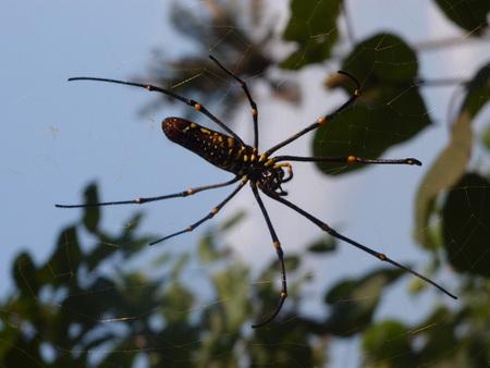 koh: Koh Kood- spider Stock Photo