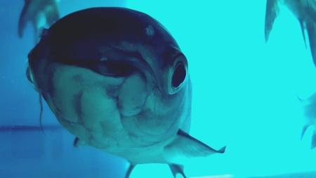 eye: Macro fish underwater photo