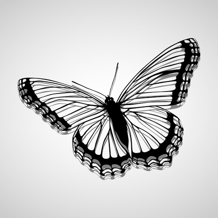 Schmetterlings-Icons gesetzt für die weitere Verwendung groß. Vektor-EPS10.