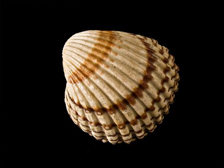Sea shell isolated on a black background photo