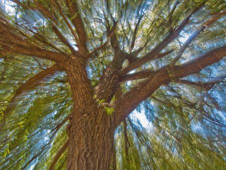 zoomed: Zoomed tree Stock Photo