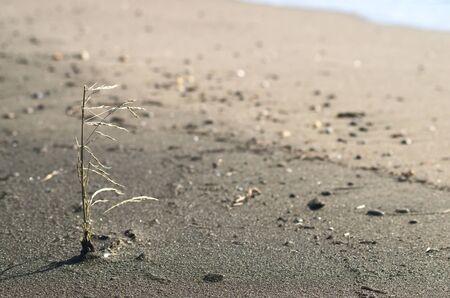 nude outdoors: Seeding on the sand