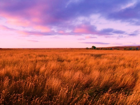 plains: Prairie Sunset