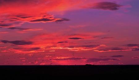 vol d oiseaux: Coucher de soleil de vol - oiseaux au coucher du soleil Banque d'images