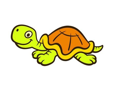 green turtle: Tartaruga
