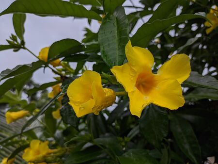 Nice yellow flower and leaf