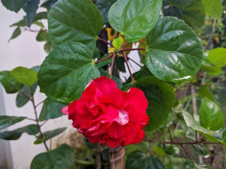 Excellent natural red flowers in the garden Banque d'images