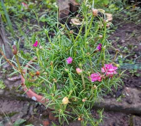 Nice pink color flowers in the garden Banque d'images