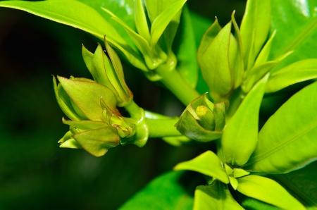 Flower of green photo