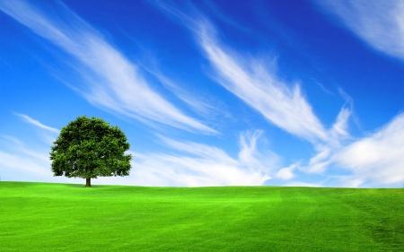 Boom in het groene veld