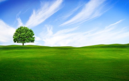 Tree in the green field  photo