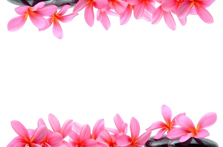 hawaiian lei: Beautiful Frangipani flowers - border design Stock Photo