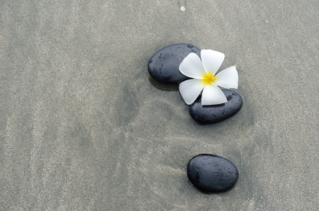 White frangipani and zen stone on the sandy beach photo