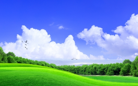 Green Grass on the hill with cloud and the blue sky