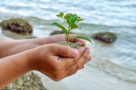 earth handful: Human hands holding little sprout with care Stock Photo
