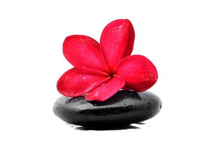 Zen stones with frangipani flower