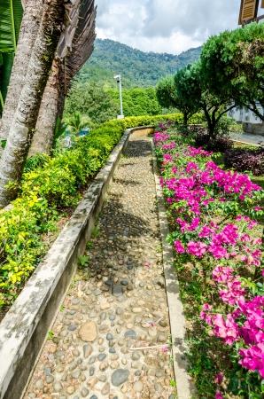path cottage garden: Walking path in the garden