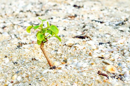 Small plant on sand photo