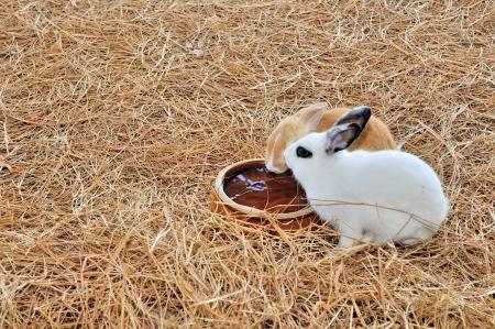 the hutch: Rabbits
