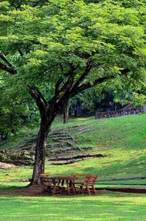 Rest place under big tree photo