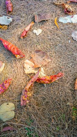 dead leaves: Oto�o muertas hojas en el suelo, ideal para fondos y texturas