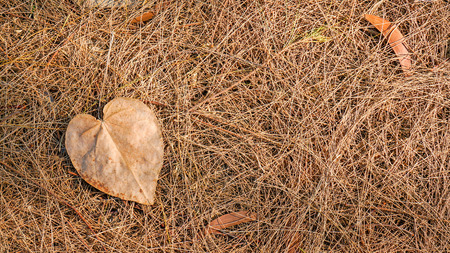 Autumn dead leaves on the ground, ideal for backgrounds and textures photo